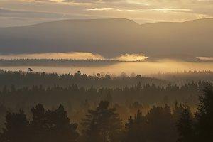 Sunrise-rothie-forest-2.jpg