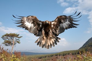 RTG-golden-eagle-102.jpg