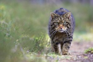 LRL-wildcat-127.jpg