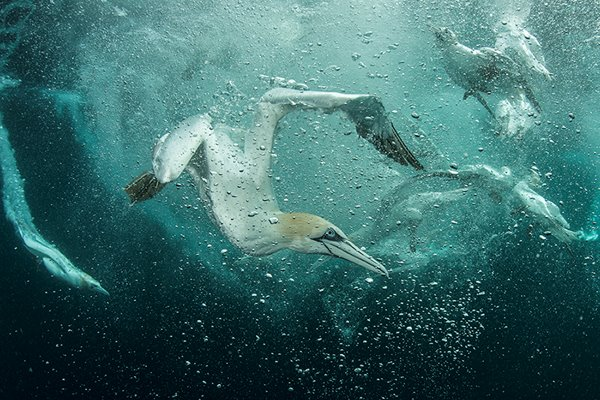 Stop the tide of abuse and let our seas and oceans recover