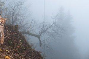 Lynx-in-mist.jpg