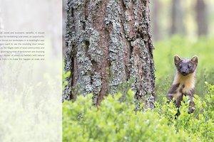 StBP_pine_marten.jpg