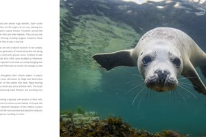 StBP_seal.jpg