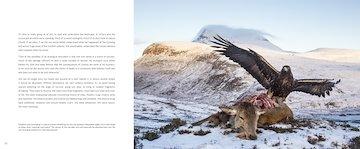 StBP_eagle.jpg