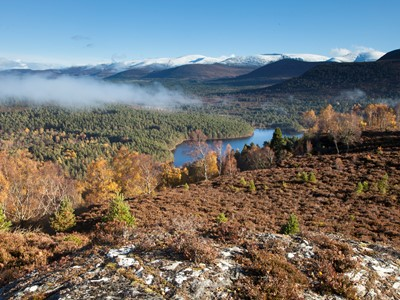 Rothiemurchus Forest on misty autumn morning with Cairngorms beyond, Cairngorms National Park, Scotland