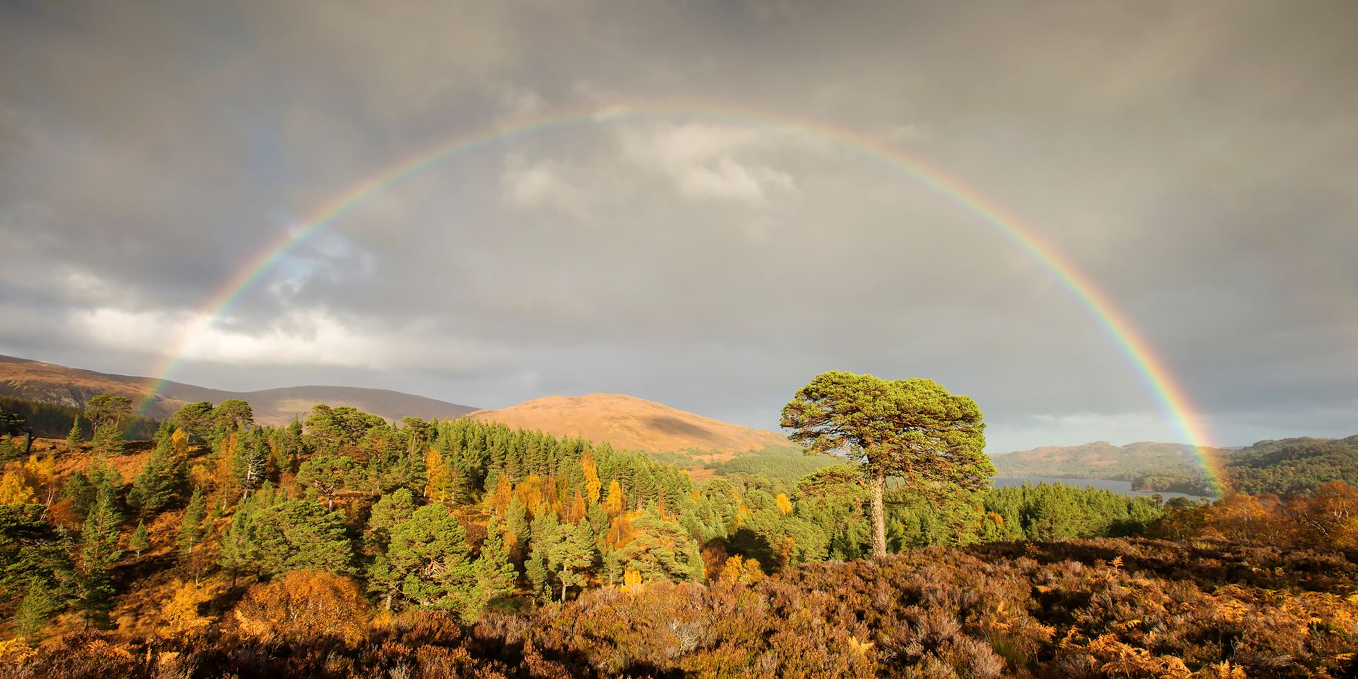 Rainbow over Scot's pine tree, Glen Affric, Scotland