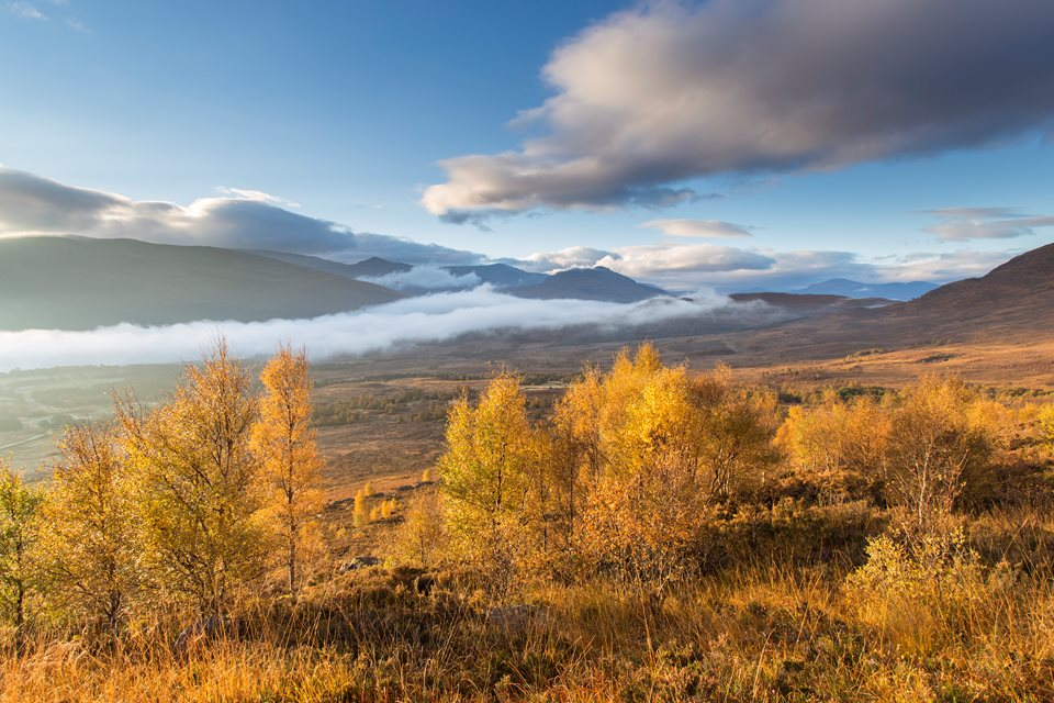 Rewilding Retreat - Rewilding Retreat - Cairngorms National Park, Scotland