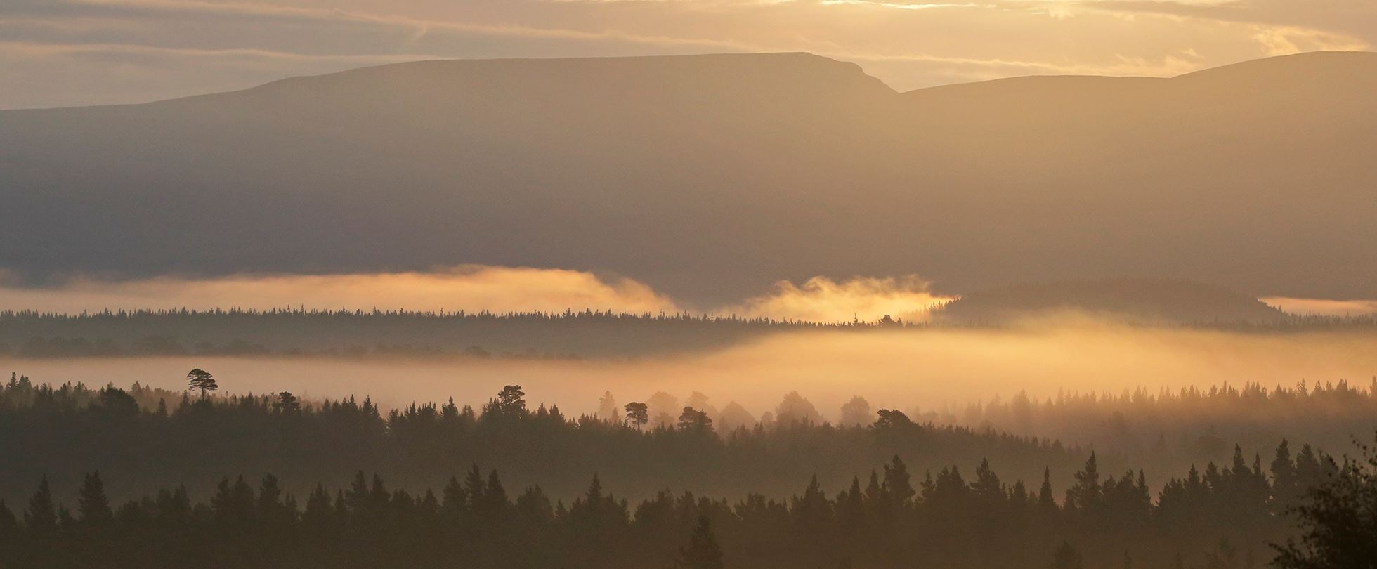 Looking over Rothiemurchus ancient caledonian pine forest at dawn. In the Cairngorms National Park, Highlands, Scotland, UK