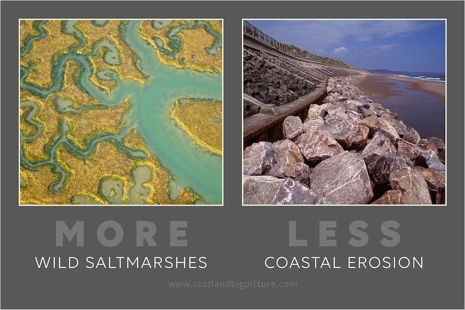 Rewilding Postcards