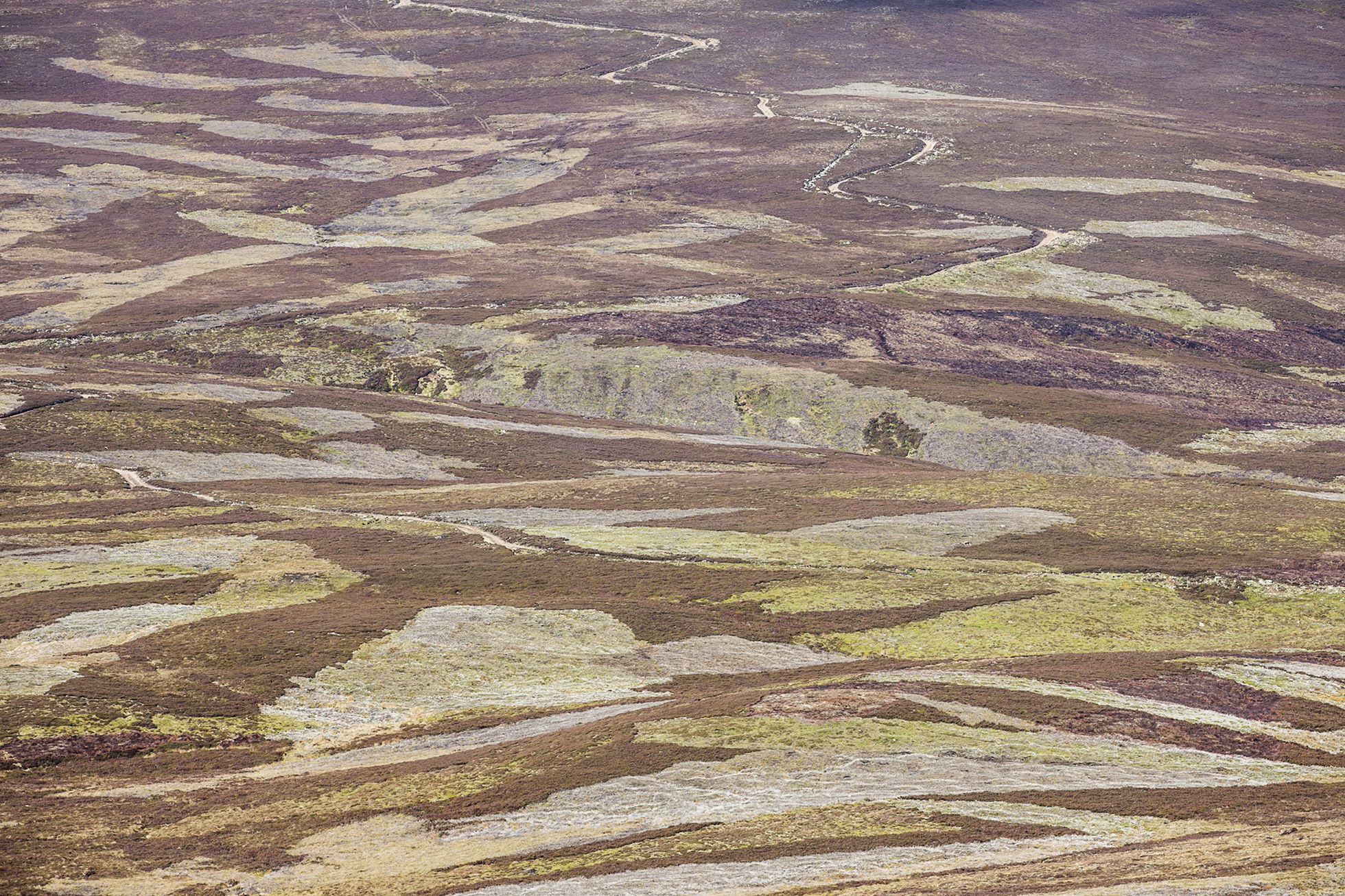 Patchwork of vegetation across grouse moor, Deeside, Scotland.