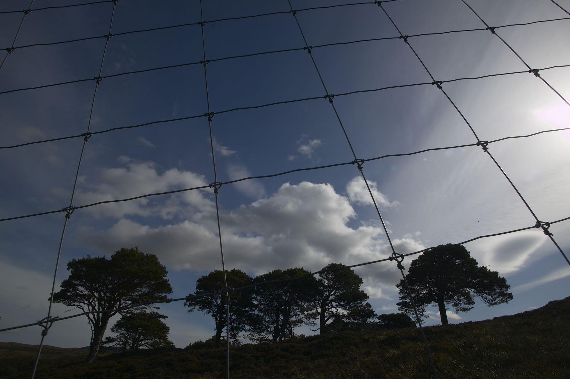 Deer fencing enclosing area of Caledonian Pine Forest designated for regeneration. Alladale Estate, Ardgay, Sutherland, Scotland.