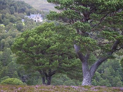 Alladale Lodge on Alladale Wilderness Reserve, Sutherland, Scotland