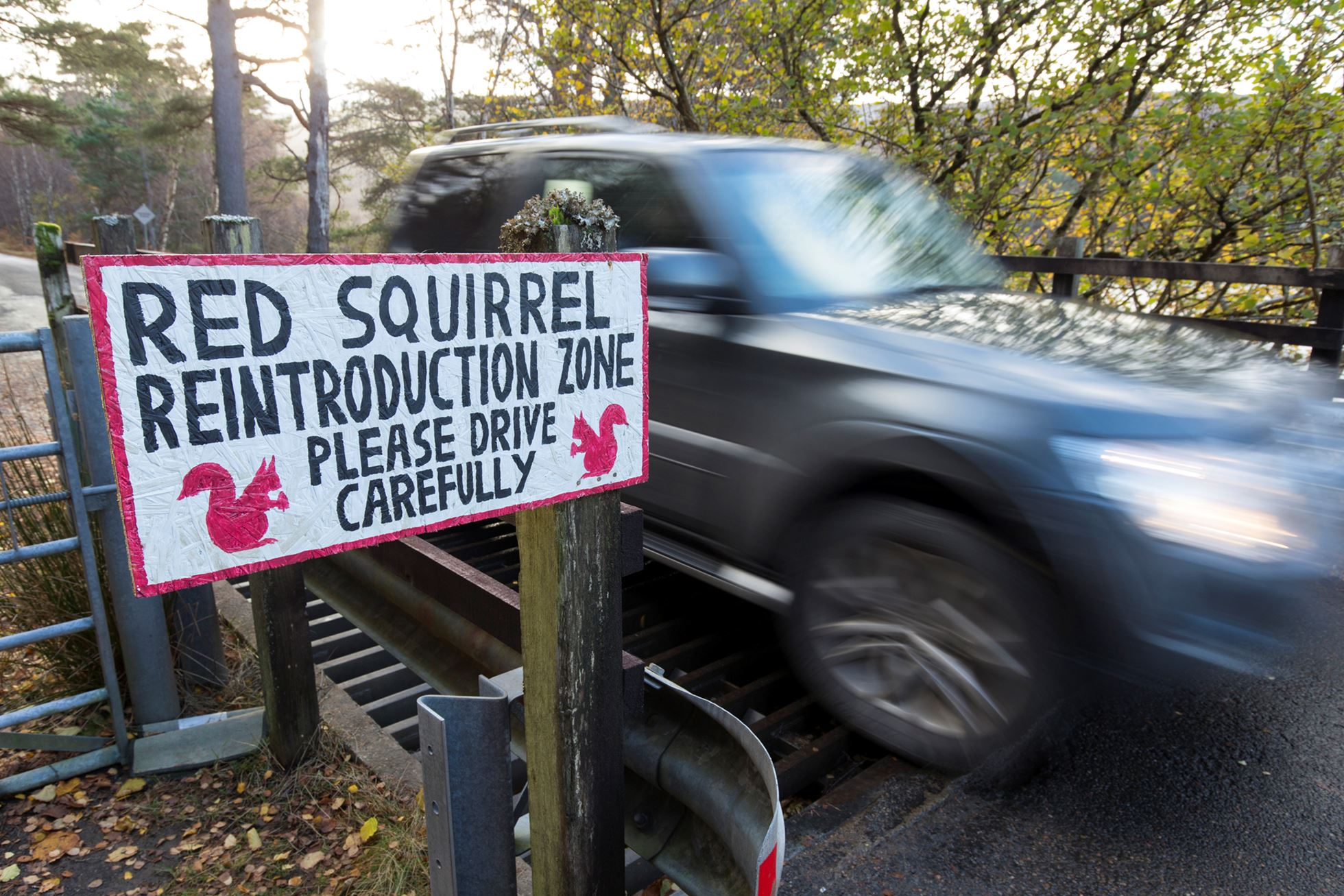 Sign erected alerting drivers to red squirrels crossing road, Shieldaig, Wester Ross, Scotland.