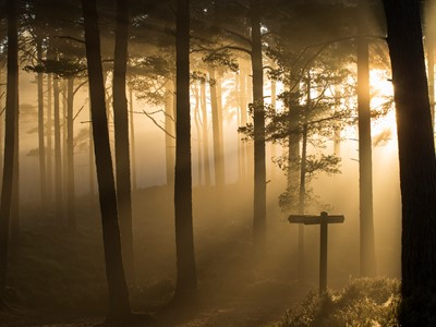 Sunlight splintering through misty pine forest at sunset, Glencharnoch Wood, Cairngorms National Park, Scotland