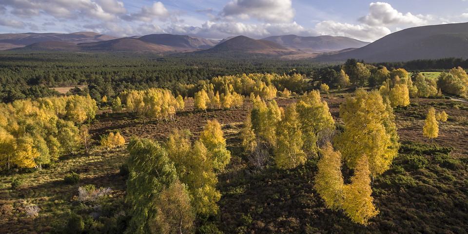 Rewilding Explorer: Highlands Autumn  image