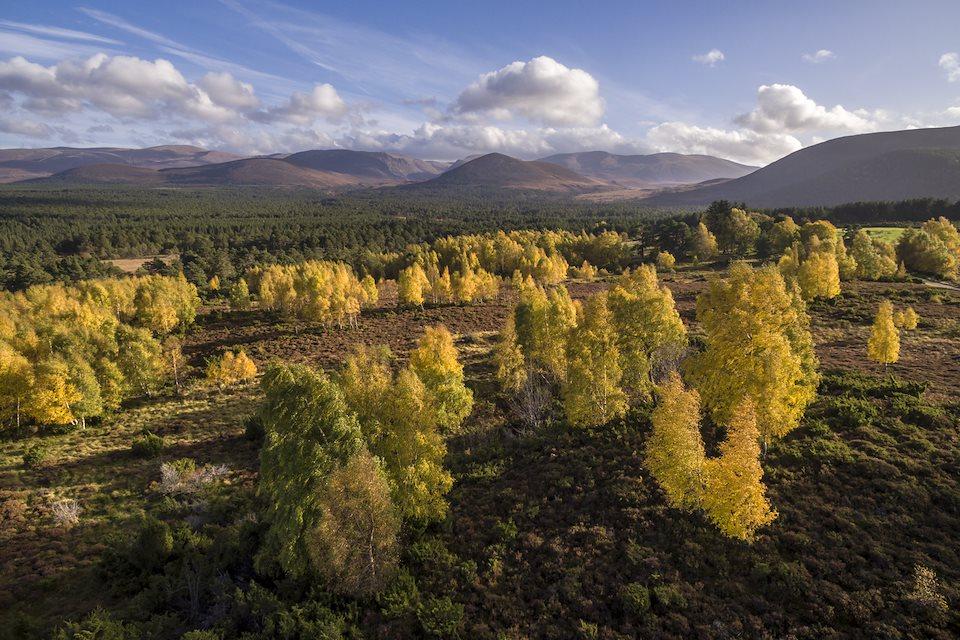 Rewilding Explorer: Highlands Autumn  - Rewilding Retreat - A journey of rewilding across the spectacular Scottish Highlands.