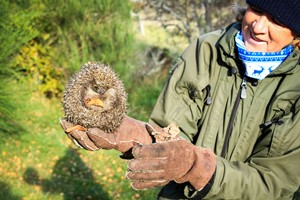 Orphaned hedgehogs were rehabilitated and released onto the reserve in November 2019.