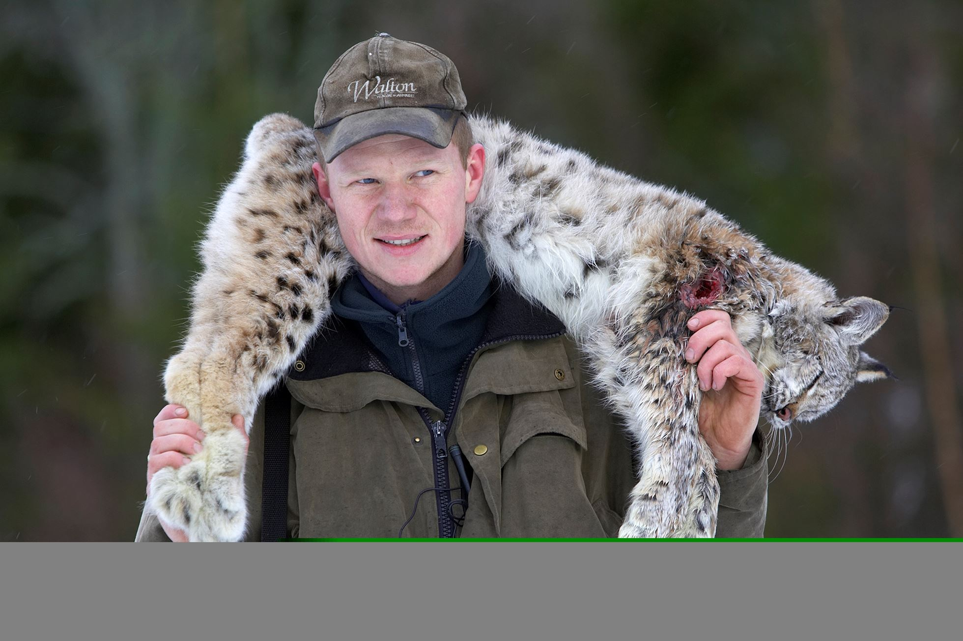 Norwegian hunter with recently shot lynx as part of government quota system, Nord-Trondelag, Norway.