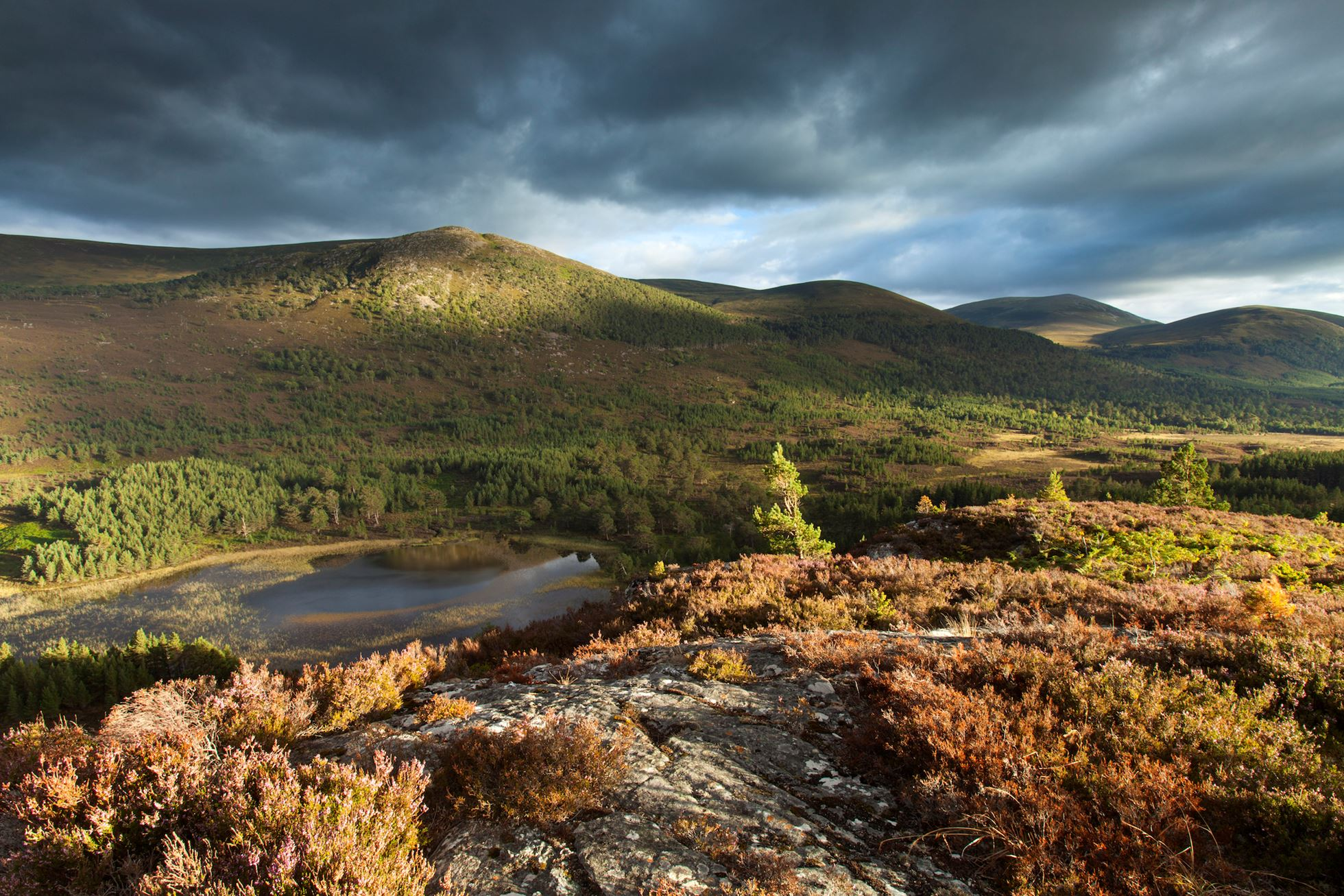 Elevated view over lochs and pine forest, Rothiemurchus, Cairngorms National Park, Scotland