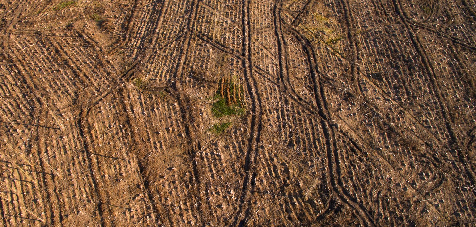 Harvested Plantation