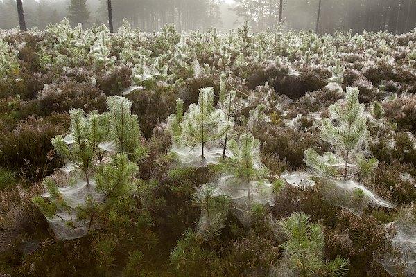 Establishment of new native woodland