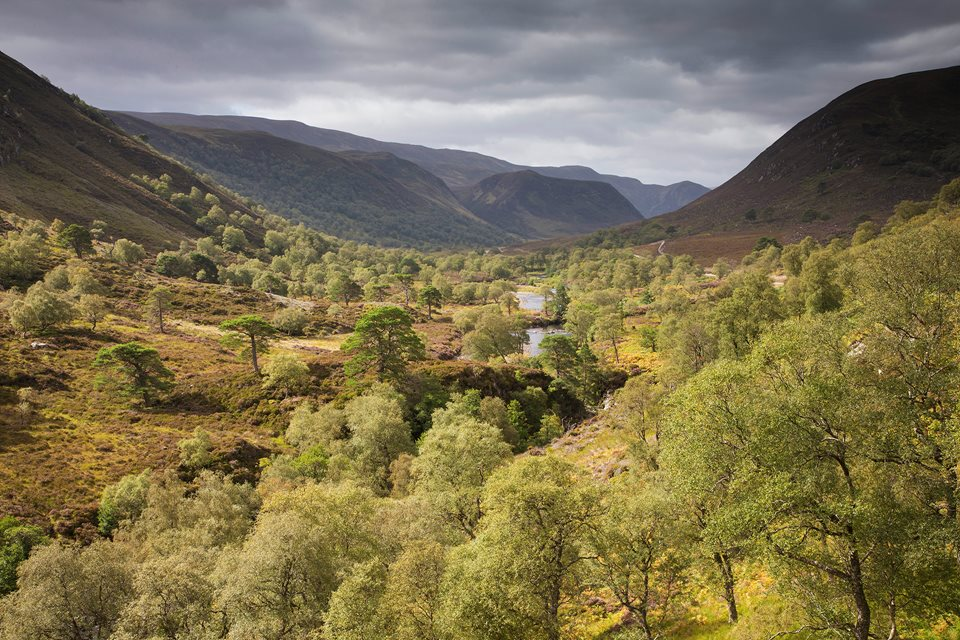 Wilderness Weekend: Alladale Reserve - Rewilding Retreat - A luxurious stay in a Victorian lodge at one of Scotland's most celebrated rewilding initiatives.