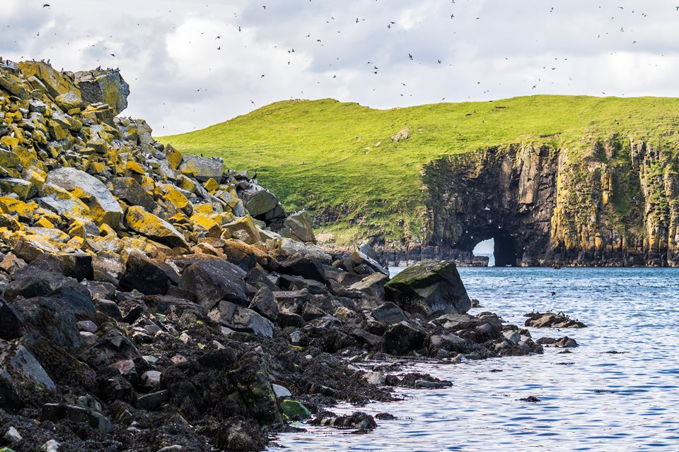 Wilderness Weekend: The Minch - Rewilding Retreat - Cruise across the rich waters of the Minch, a haven for cetaceans and seabirds.