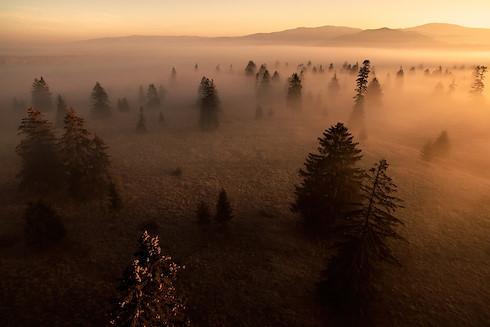 Rewilding Explorer: Transylvania image