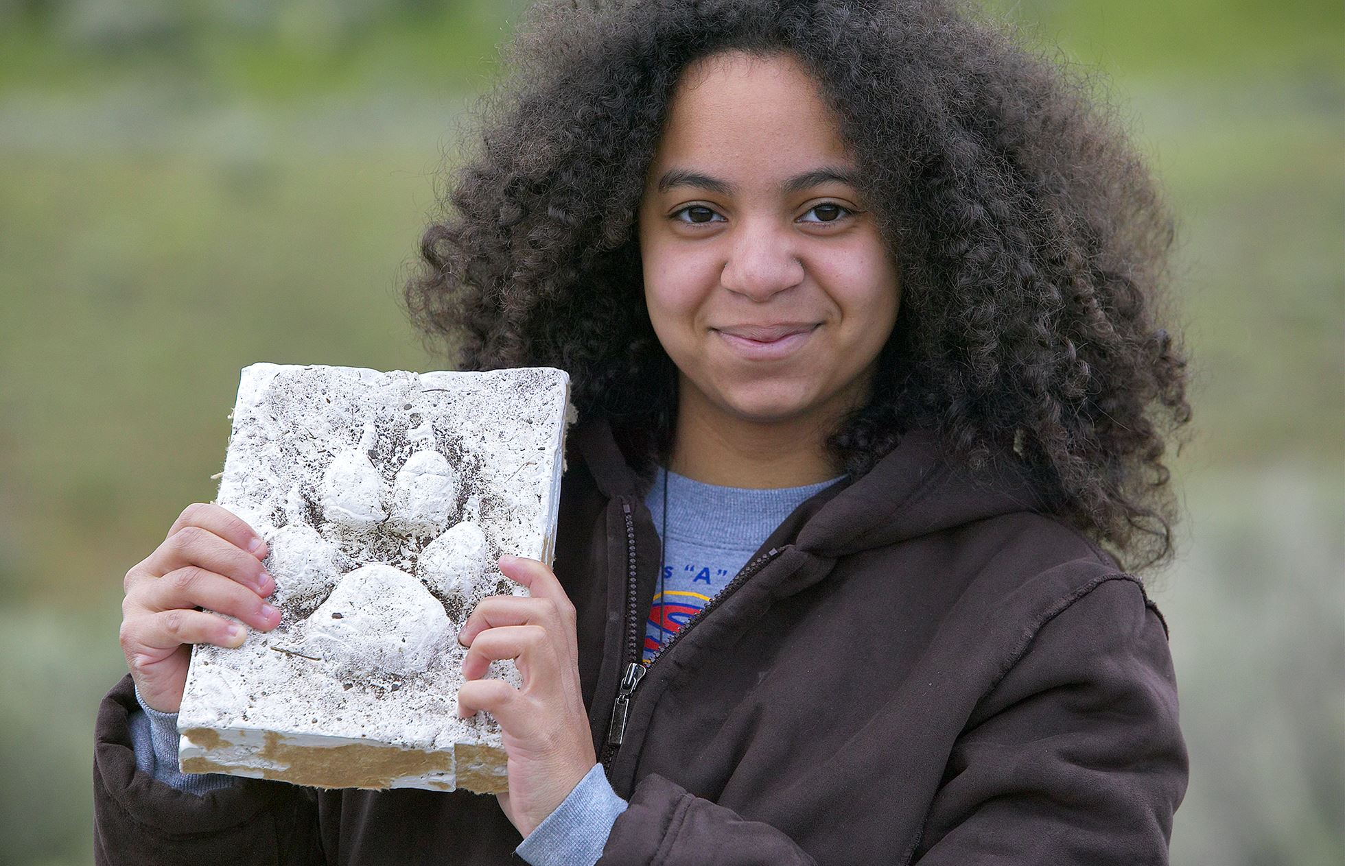Young wildlife watcher holding up plaster cast of wolf footprint as part of education programme about wolf reintroduction  (wolf reintroduction in 1995 has boosted eco-tourism), Yellowstone National Park, USA