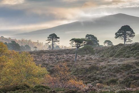 Wilderness Weekend: Alladale Autumn image