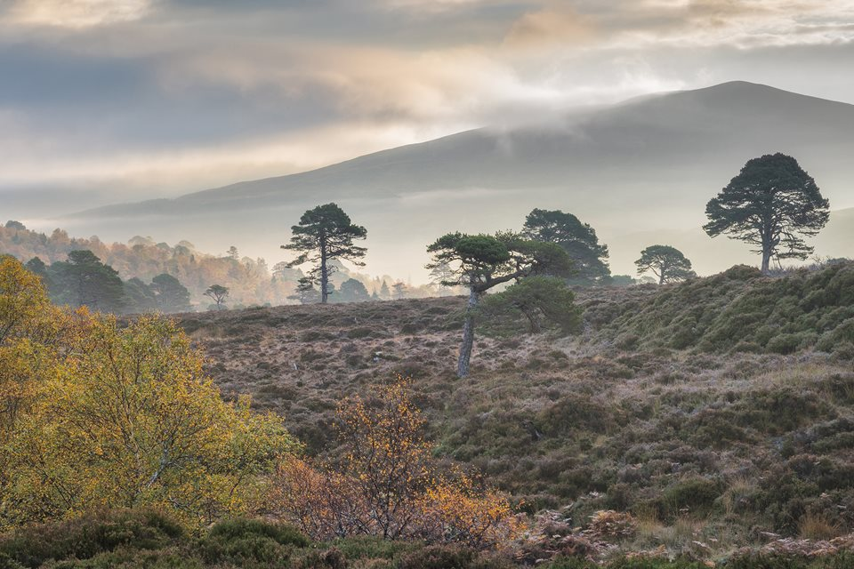 Wilderness Weekend: Alladale Autumn - Rewilding Retreat - A luxurious stay in a Victorian lodge at one of Scotland's most celebrated rewilding initiatives.