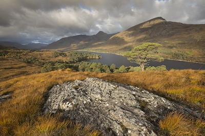View over regenerating woodland alongside Loch Affric, Glen Affric, Scotland.
