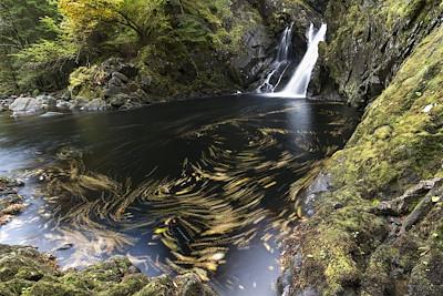 Plodda Falls in autumn, Tomich, Scotland.