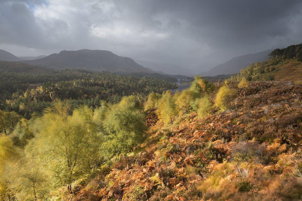 Wild Weekend: East West Wild - Rewilding Retreat - Explore Scotland's most recent rewilding initiative in its autumn splendour.