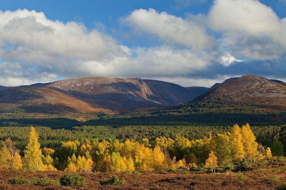 Rewilding Explorer: Highlands Autumn - Rewilding Retreat - A rewilding autumnal journey in the spectacular Scottish Highlands.