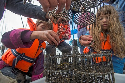 Seawilding Native Oyster Re-introduction. Oyster Hoister project. Sponsored cages put into Ardfern Yacht Centre. The community outreach part of the project. Local Kids, Dan Renton (head of seawilding) and John Smith (Oyster expert) sorting baby Oysters and putting in Oyster hoister.