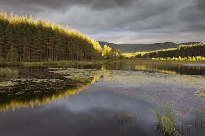 Uath Lochans in late evening light, Glenfeshie, Scotland