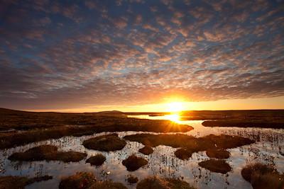 Pools and bog peatland at dawn, Flow Country, Scotland, June