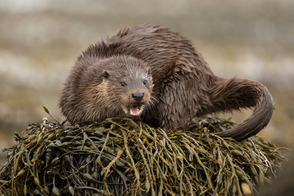 Rewilding Explorer: Mull - Rewilding Retreat - Discover an amazing array of wildlife and inspirational rewilding projects on the spectacular Isle of Mull.