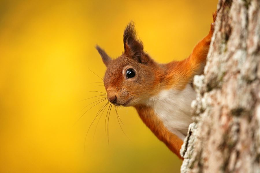 """The Red Squirrel"" crowd funding campaign now live!"