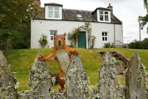 Garden-Squirrel-01.jpg