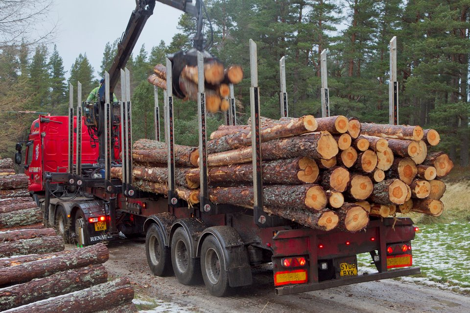 Timber transport lorry picking up harvested pines, Abernethy Forest, Cairngorms National Park, Scotland, UK