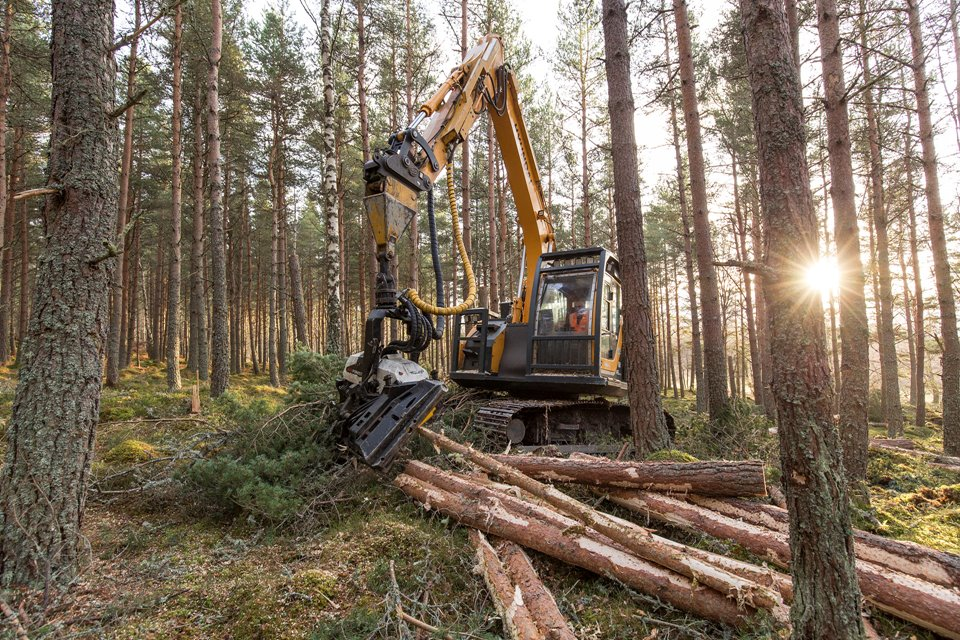 Habitat improvement felling work in pine plantation on RSPB Abernethy Reserve, Scotland