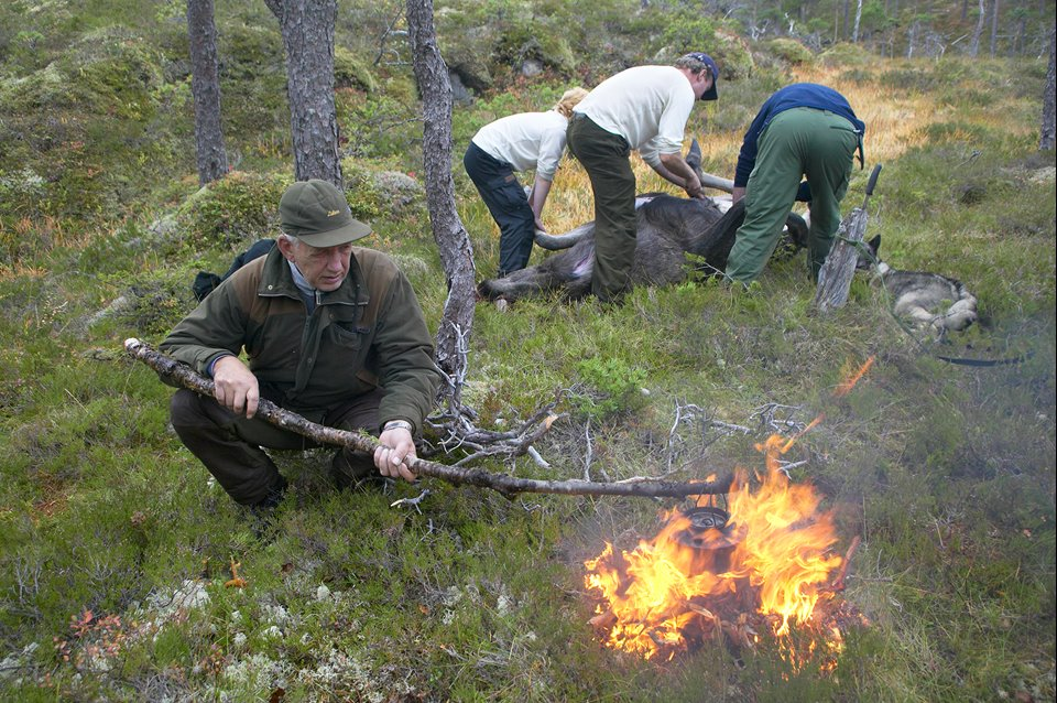 Hunter Hans Stavn, prepares a fire for coffee during annual elk hunt held in September. Flatanger, Nord-Trondelag, Norway