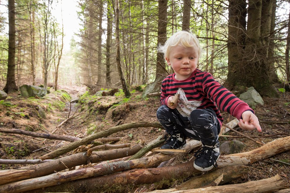 Young boy playing/exploring woodland as part of forest kindergarten session, Mucky Boots, Aberdeen Scotland.MR available