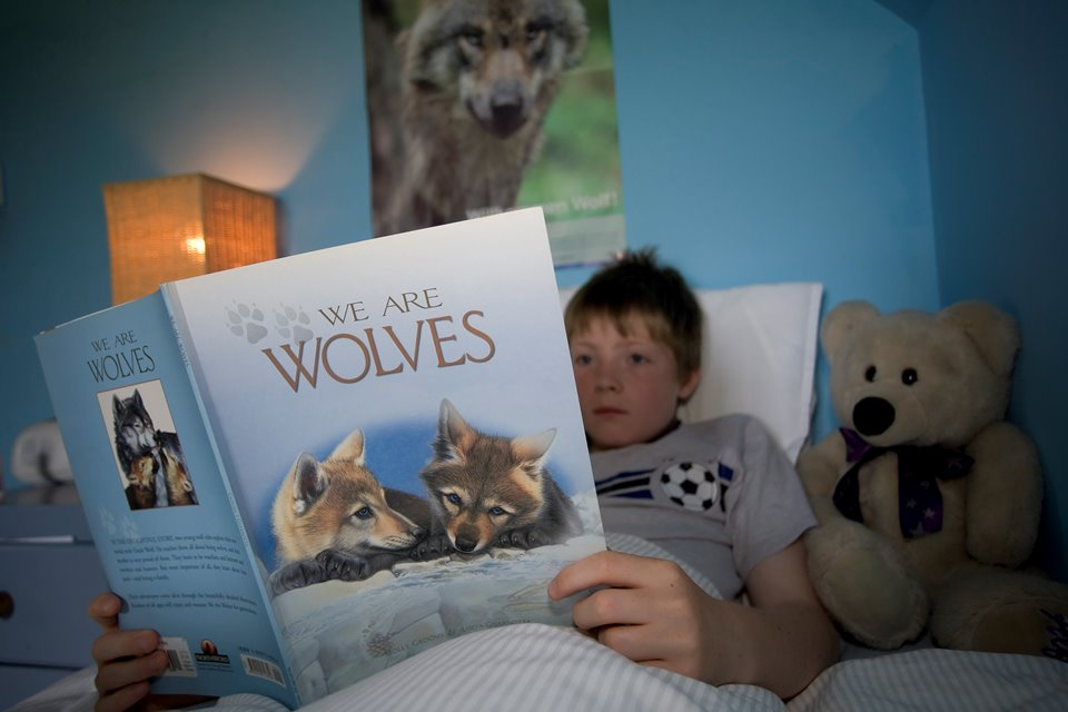 Boy reading wolf book in bed, Scotland.